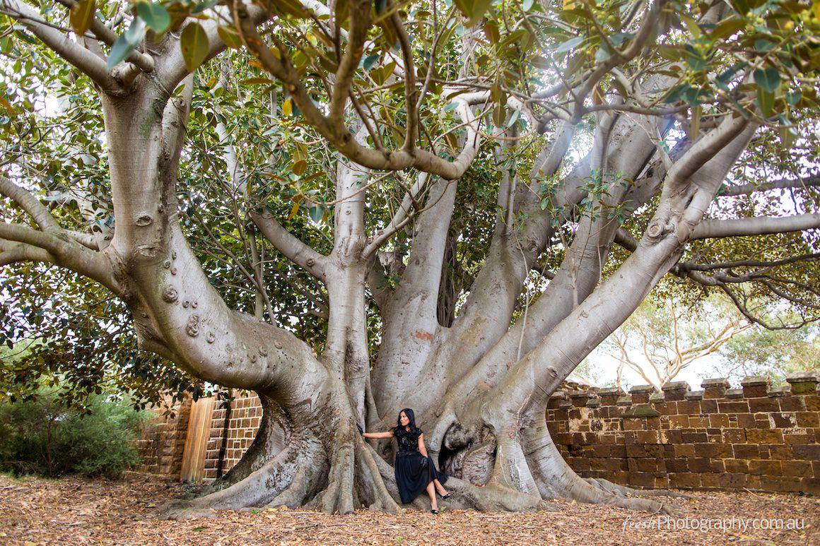 beautiful old tree - girl in black