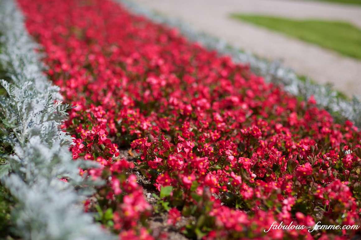 castle gardens - flowers