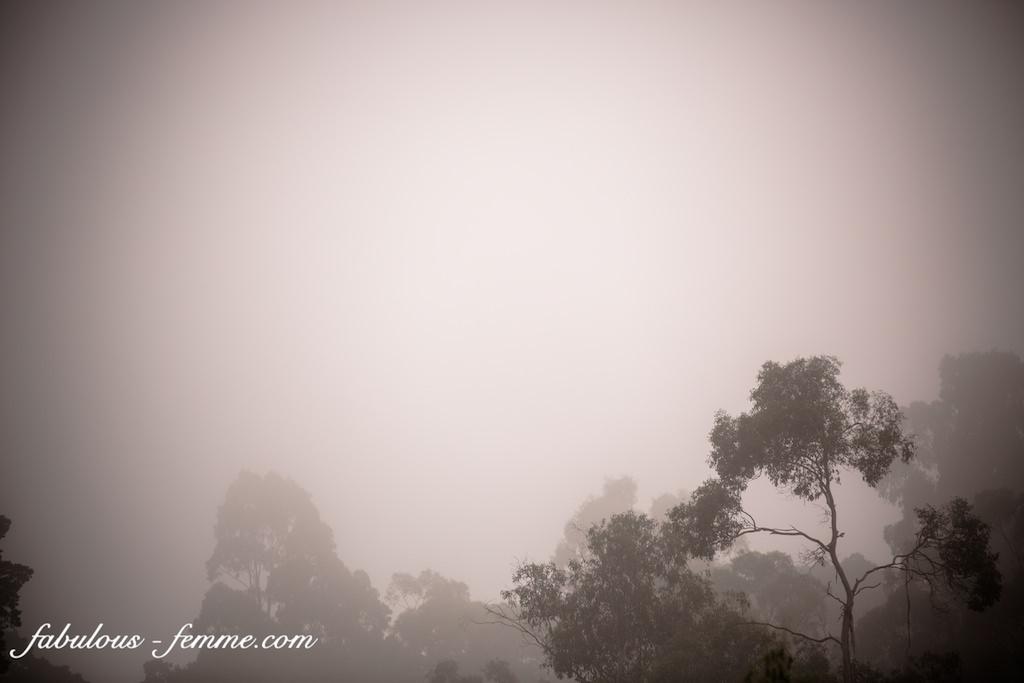 fog in park
