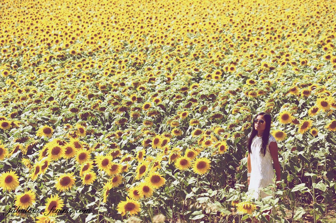 girl walking in sunflower field
