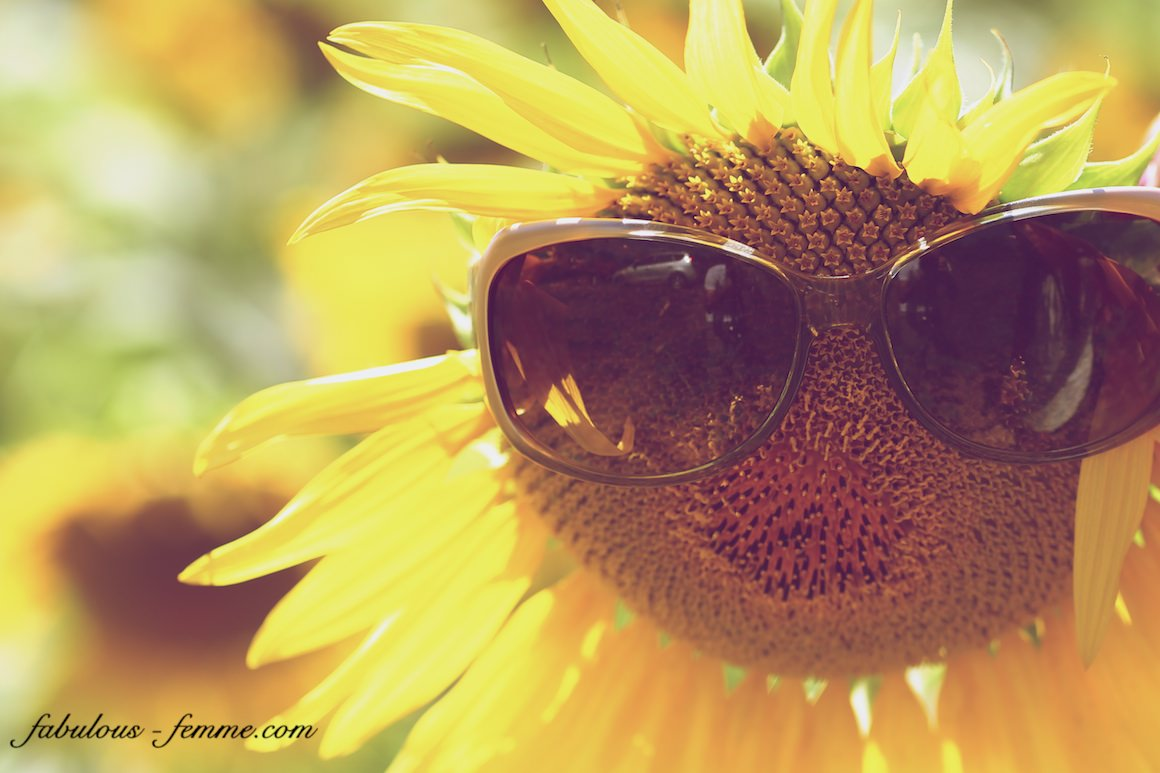 sunglasses on sunflower
