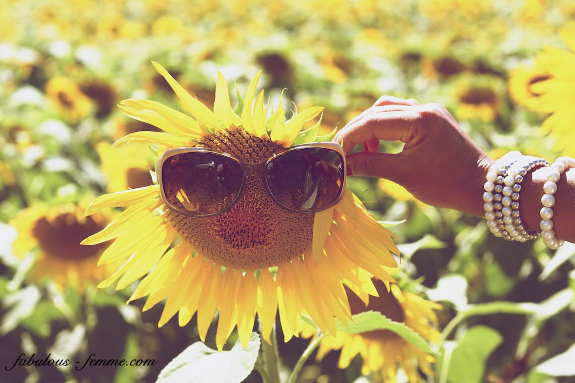 creative sunflower photography