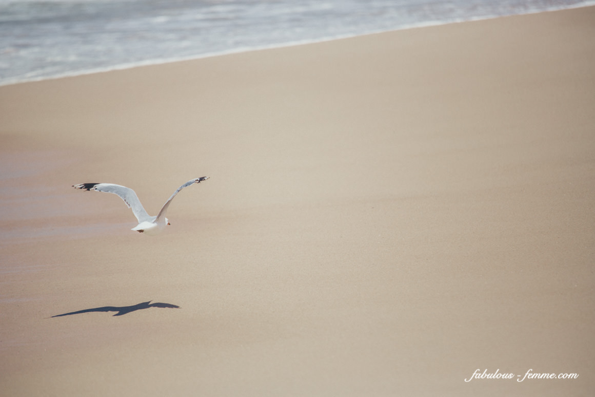bird - seagull alone on beach