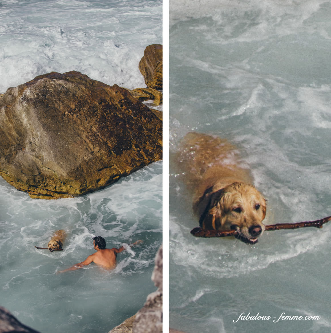 dog swimming in ocean