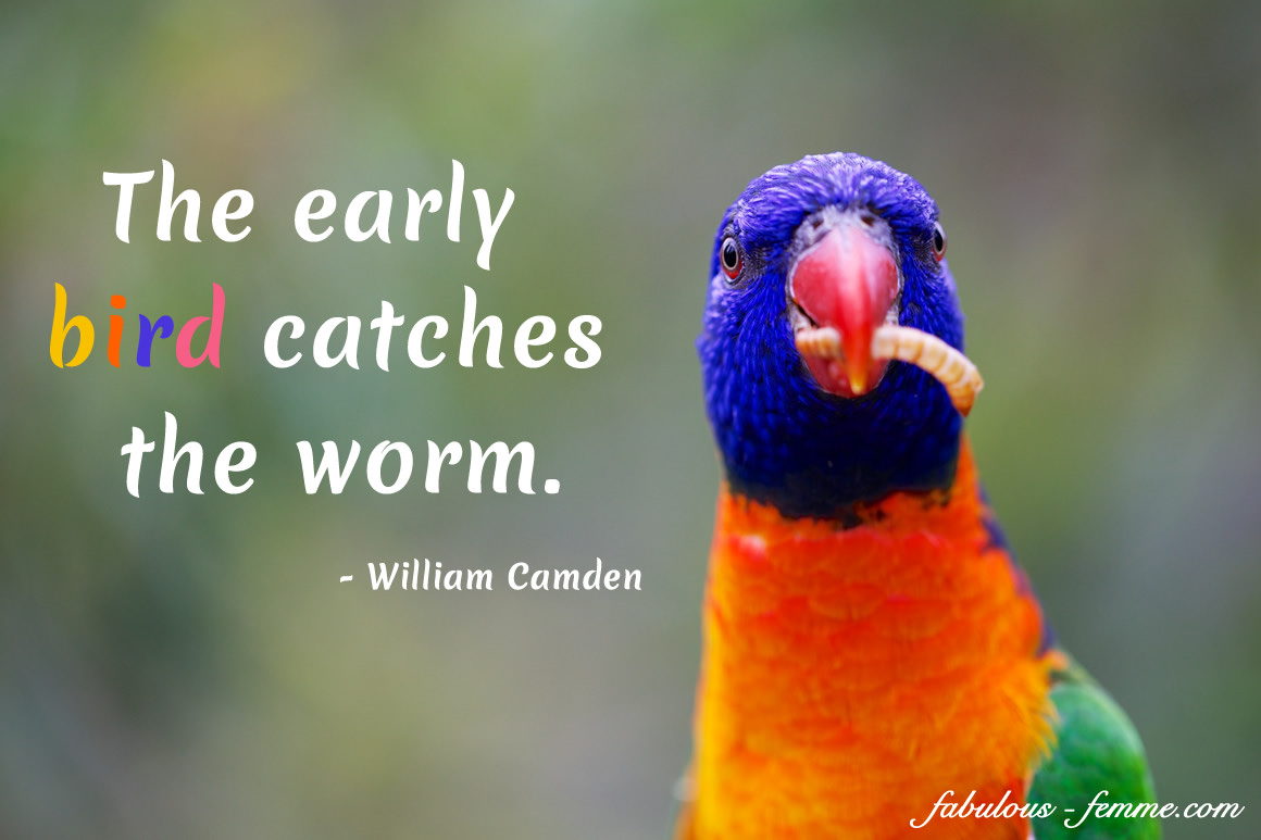 inspirational quote - the early bird catches the worm