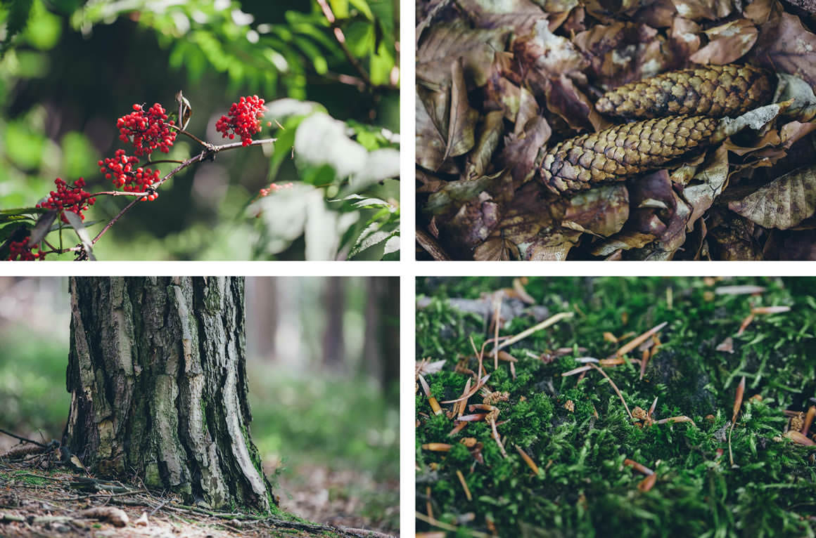 forest pictures - trunk - flowers - berries