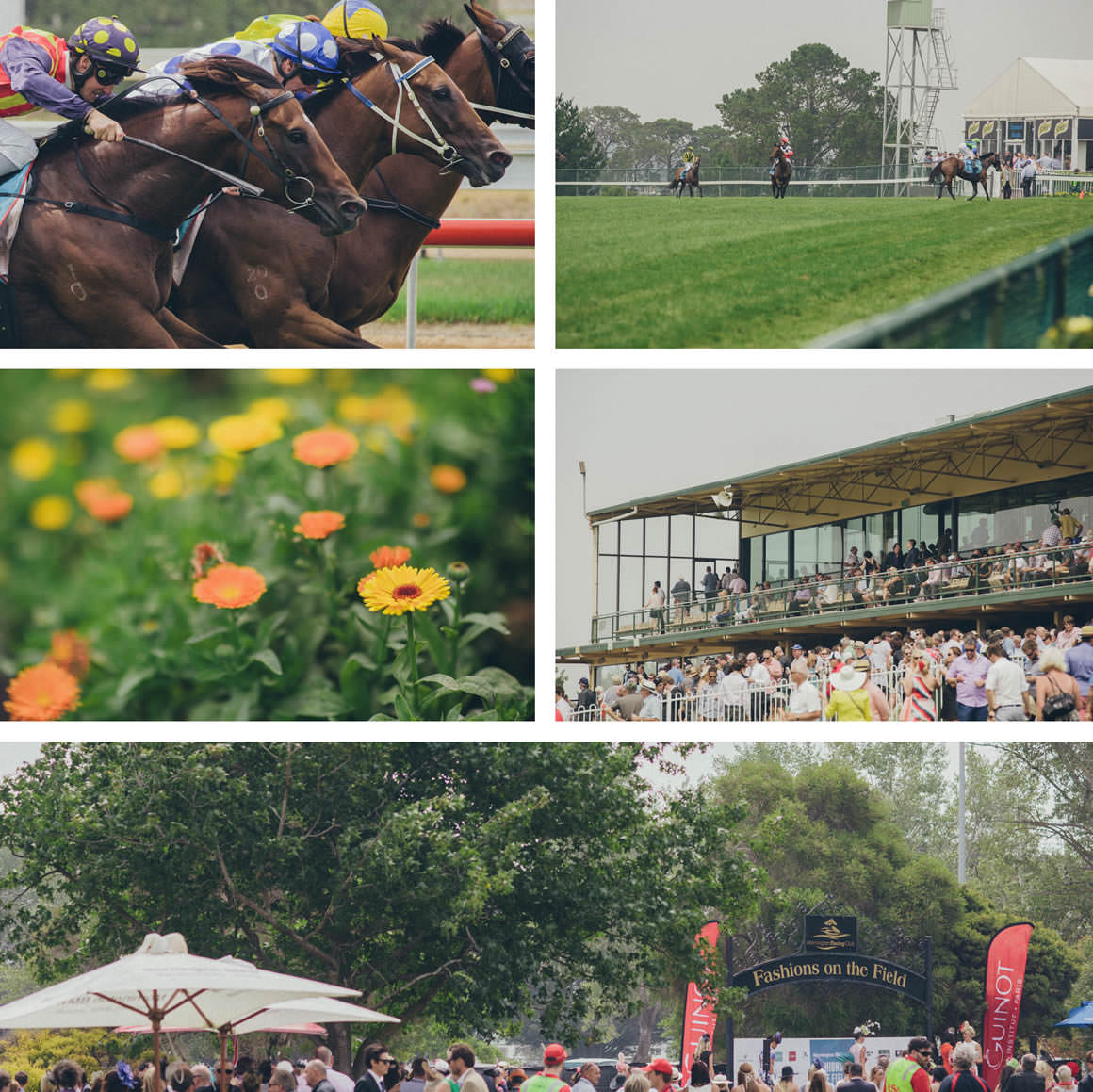 morningtoncup 2014