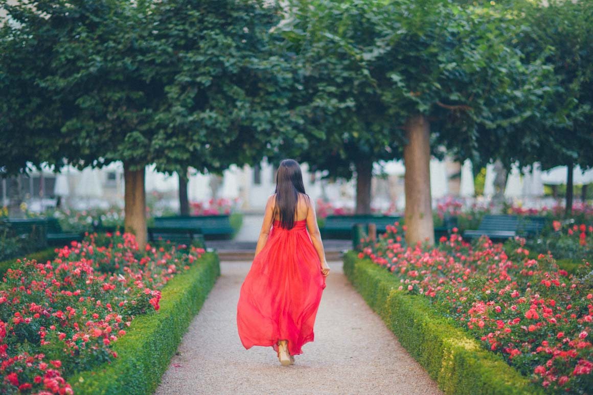 Roses In Garden: Rose Garden