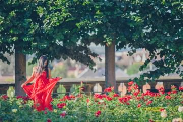 bamberg rose garden - Australian fashion blogger traveling Europe -