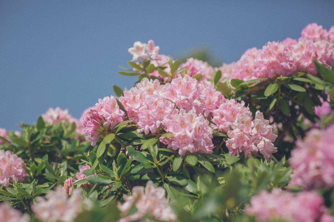 flowwrs - rohdodendrum