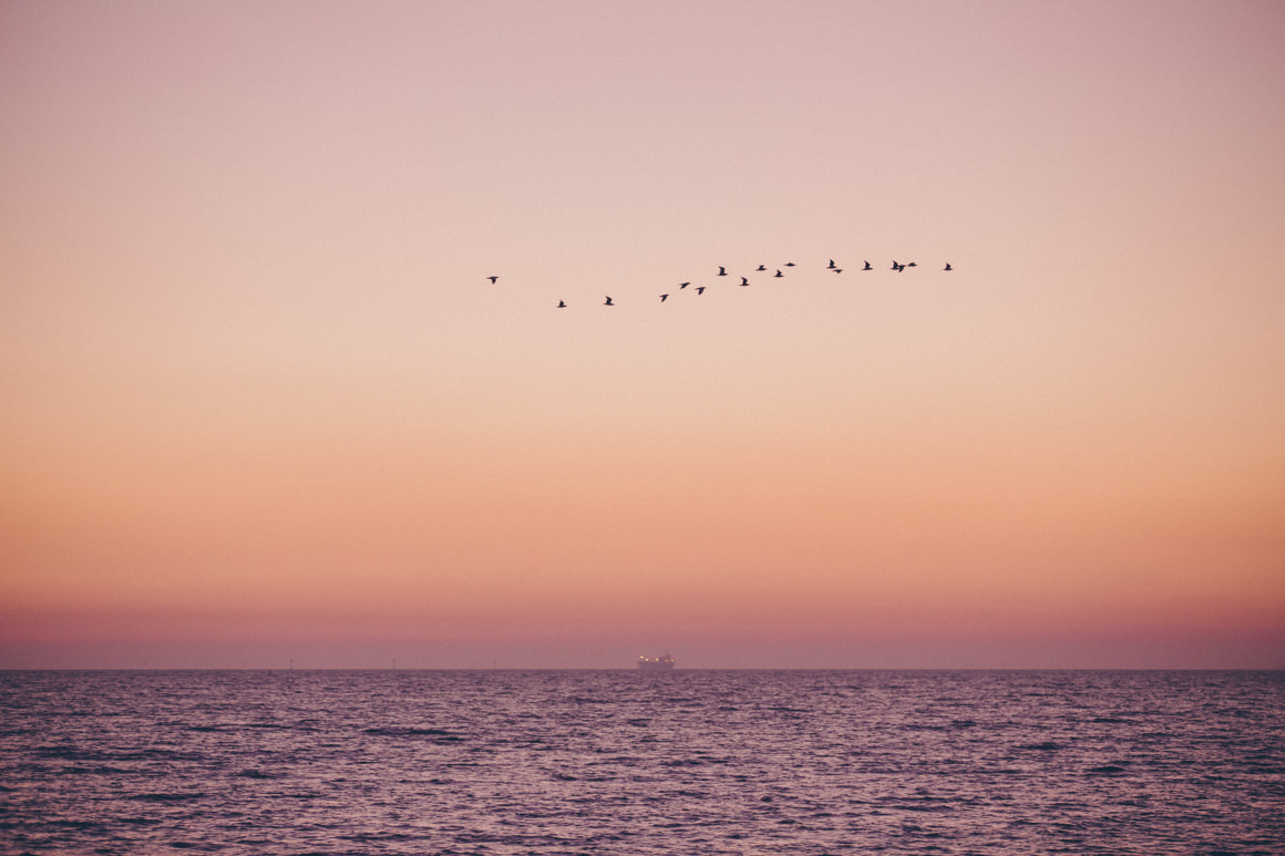 freedom birds sunset