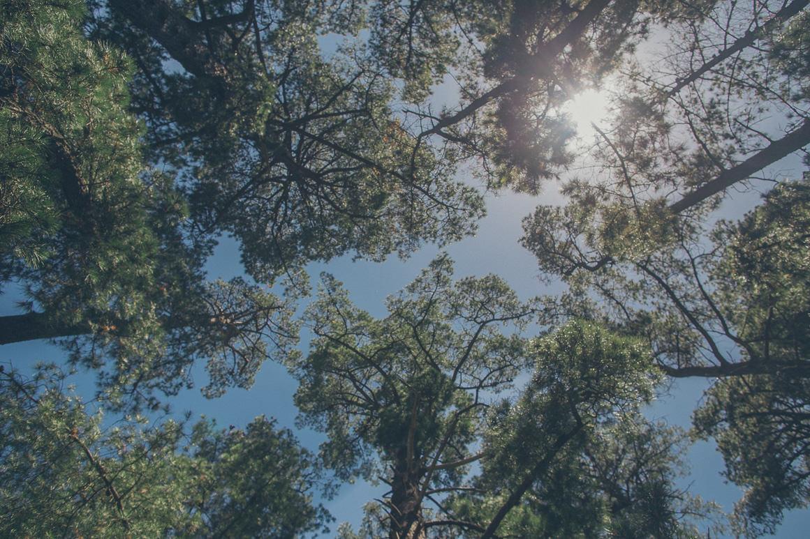 tree tops in sunlight shining
