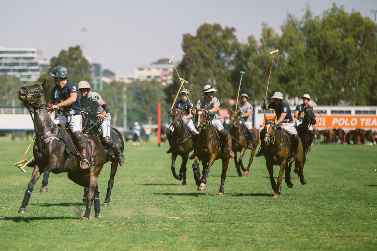 polo game in action horses