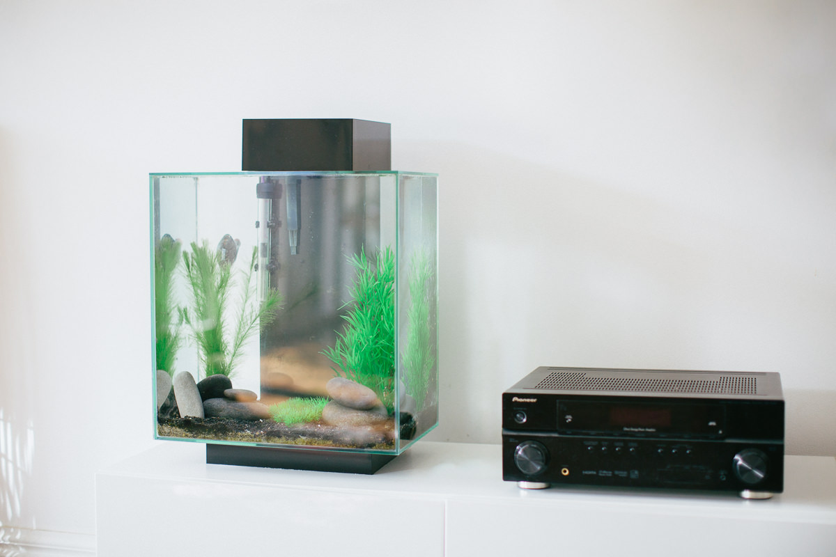 stylish aquarium