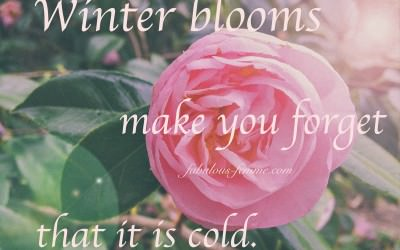 Winterblooms make you forget it's cold - Quote