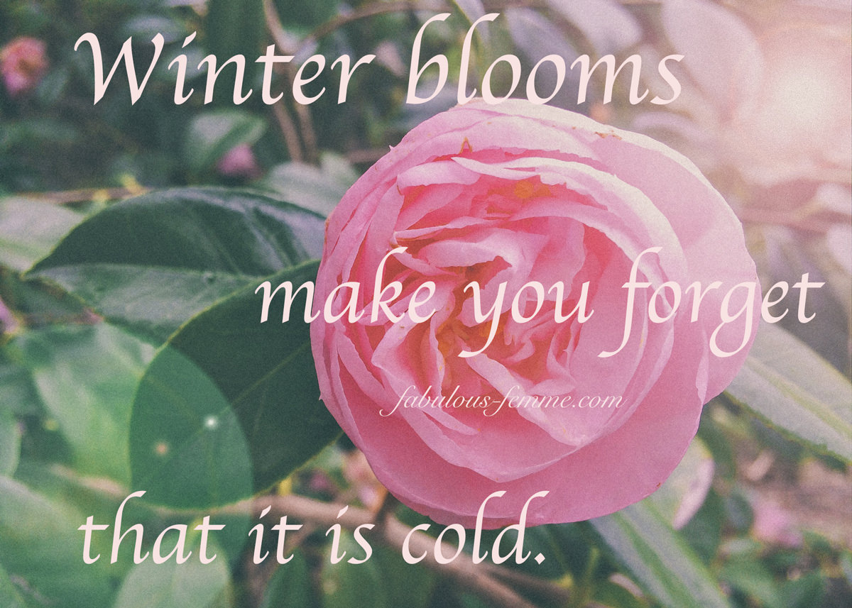 winter blooms make you forget it s cold quote