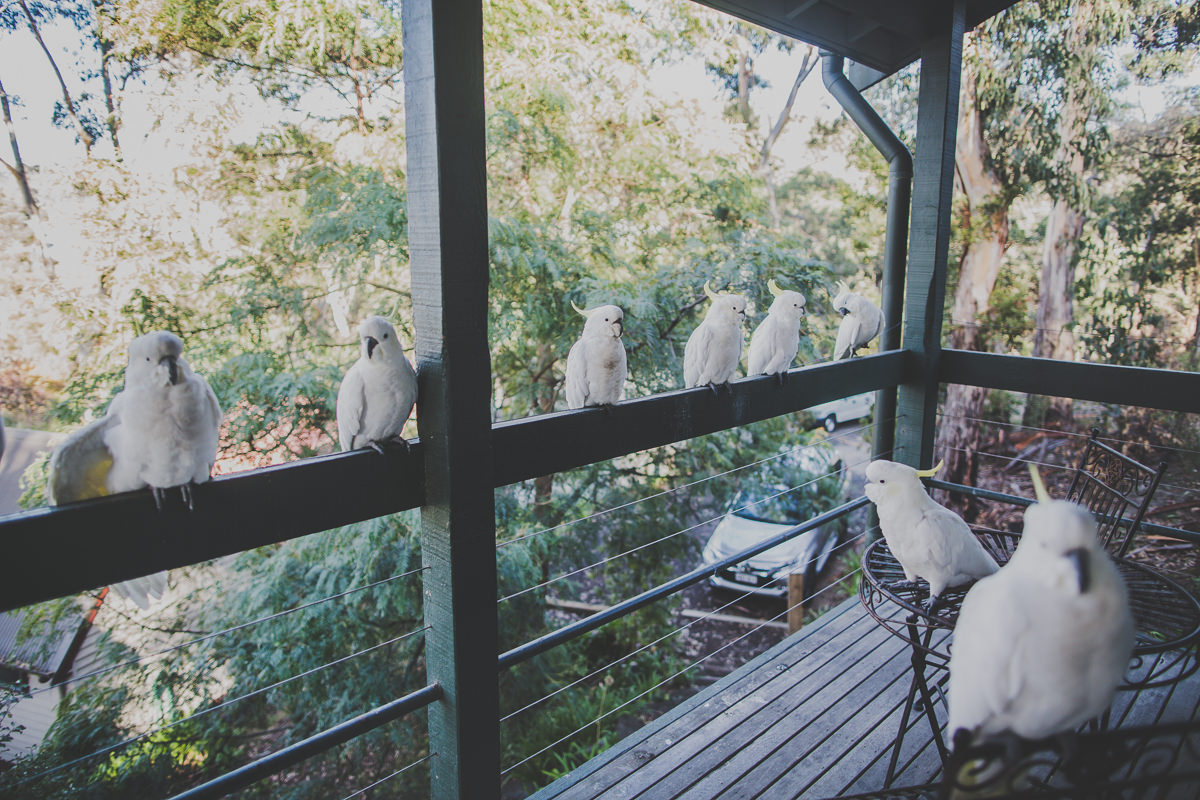 balcony view in lorne - cockatoos
