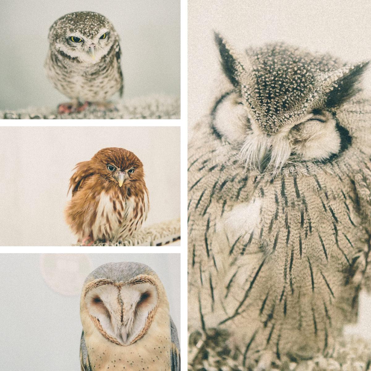 japanese owls