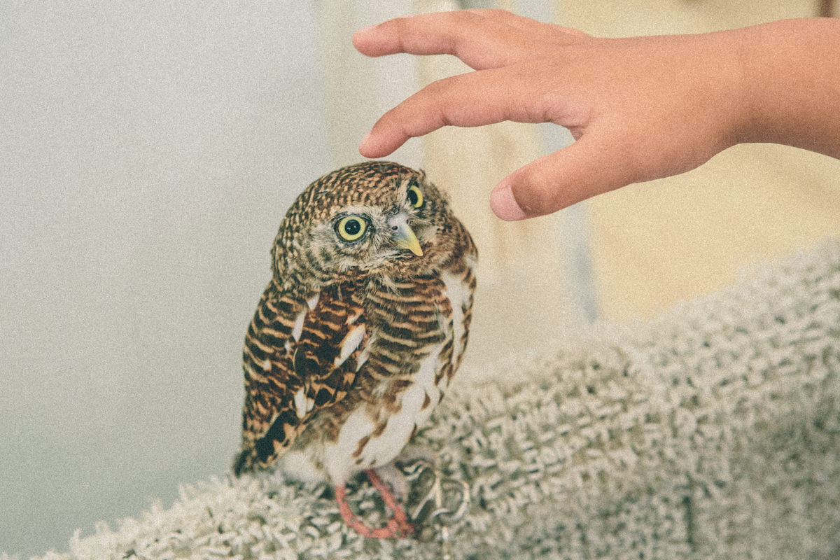 touch an owl
