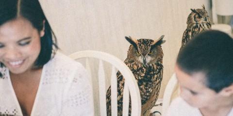 owl cafe in japan, Tokyo