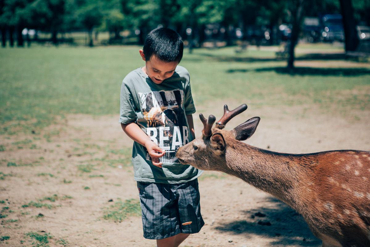 child feeding deer