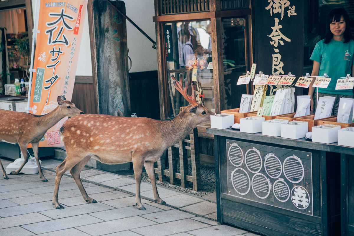 creative travel photography - melbourne - deer in shop - crazy animal pictures