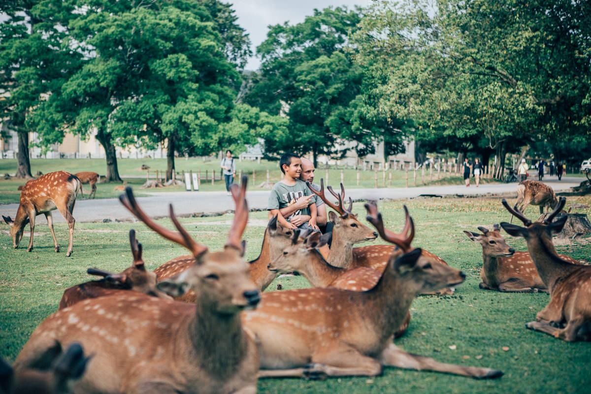 nara deer photos