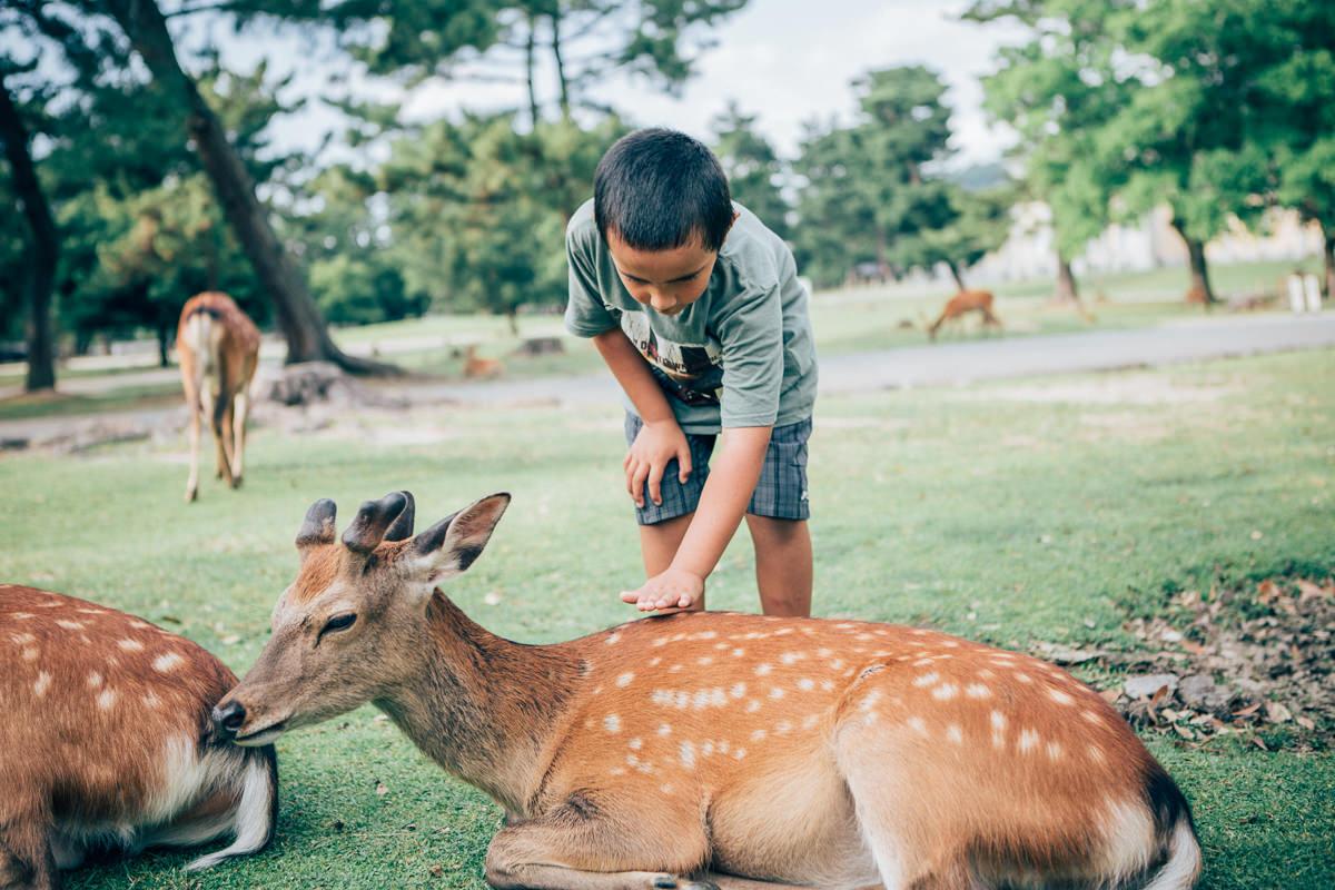 photo in nara deer park - japan close to kyoto