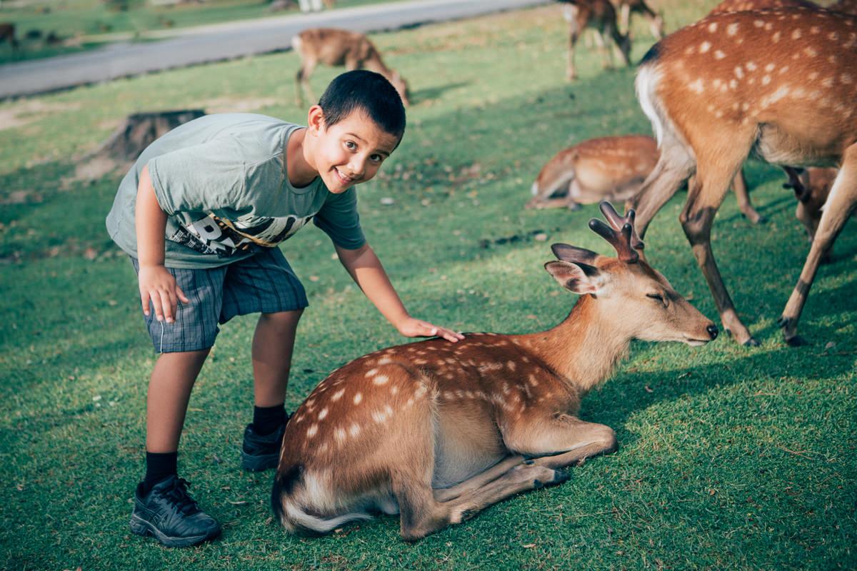 child petting deer in nara, japan - best photos