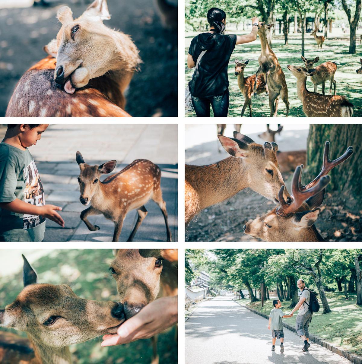nara deer park photography