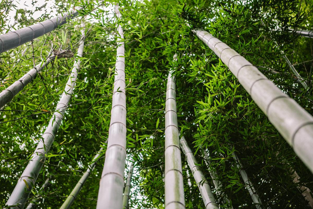 high bamboo