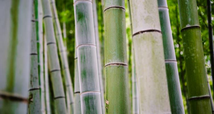 Travel experiences - Bamboo Forest in Kyoto, Japan - Melbourne Travel Blogger visits Kyoto