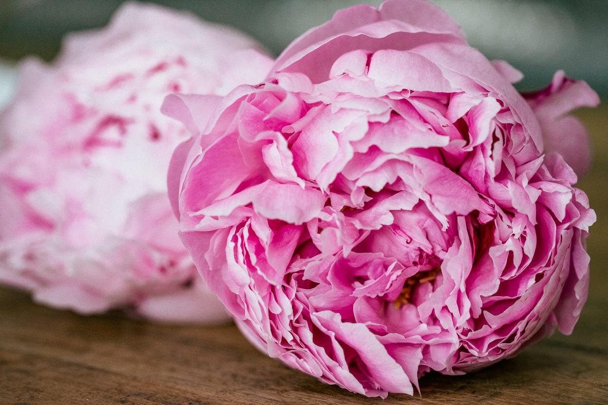 pink flowers pinies