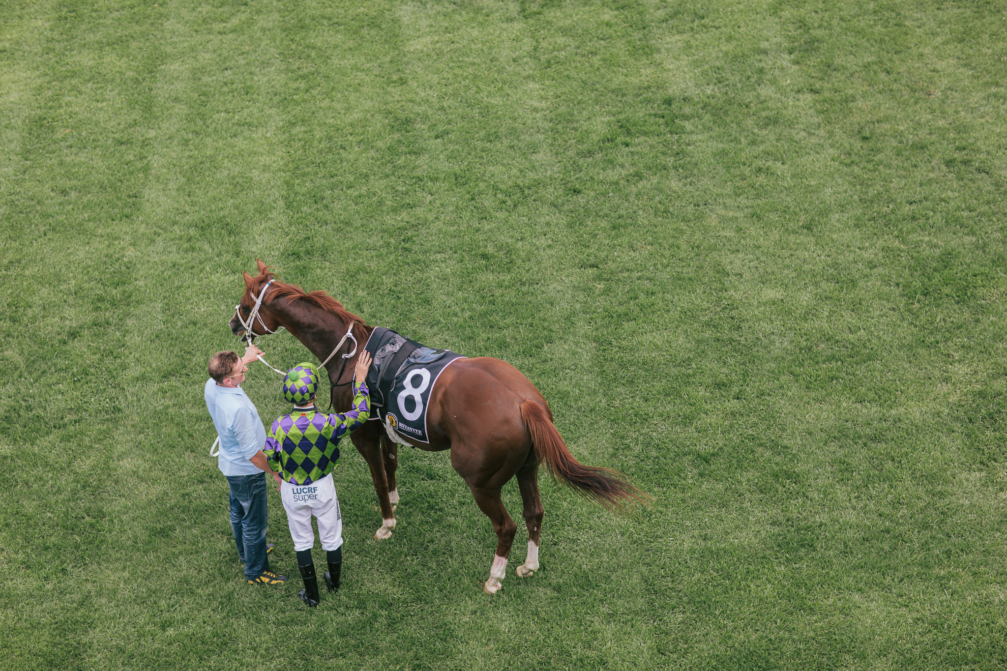 horse at mornington racecourse