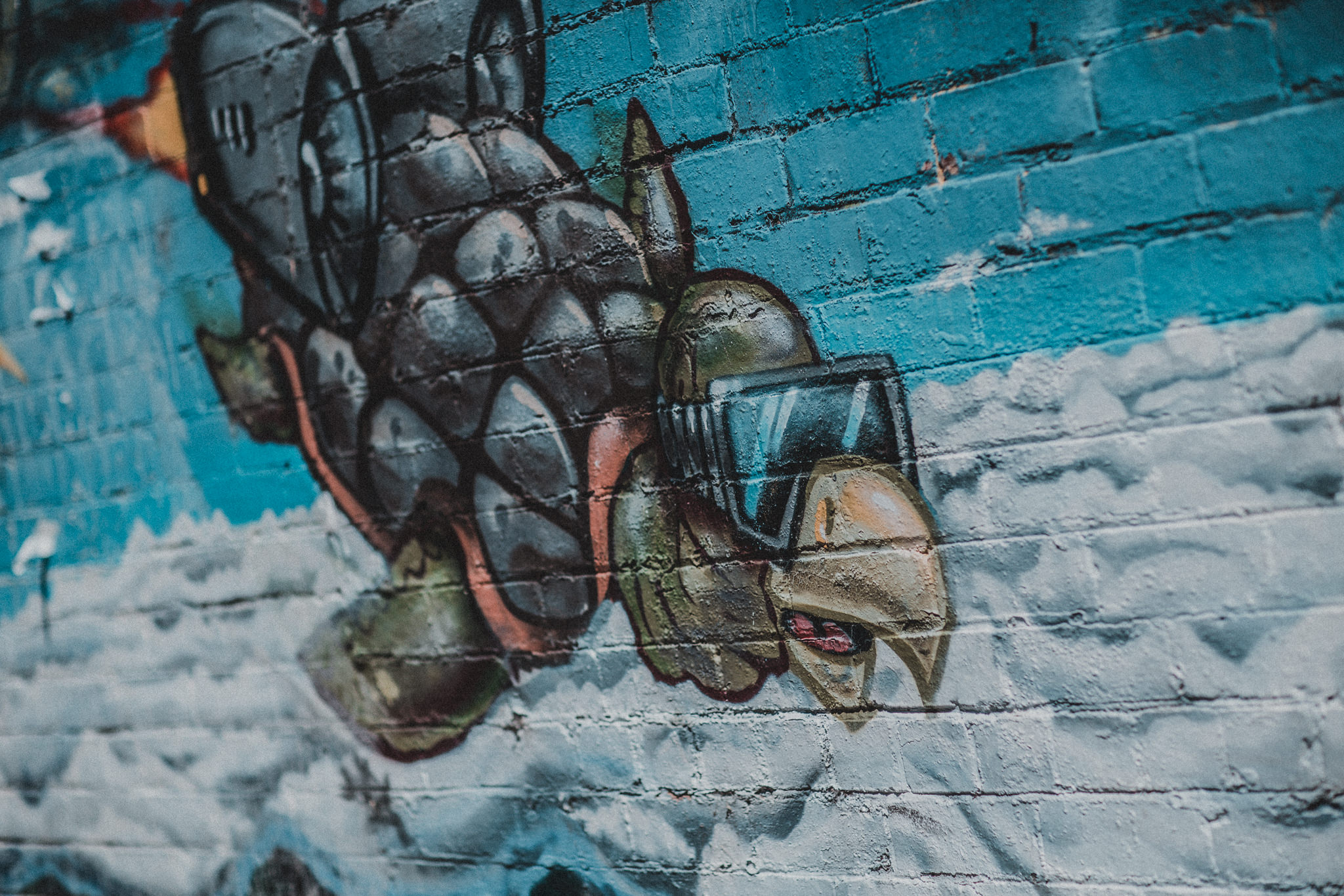 turtle grafitti