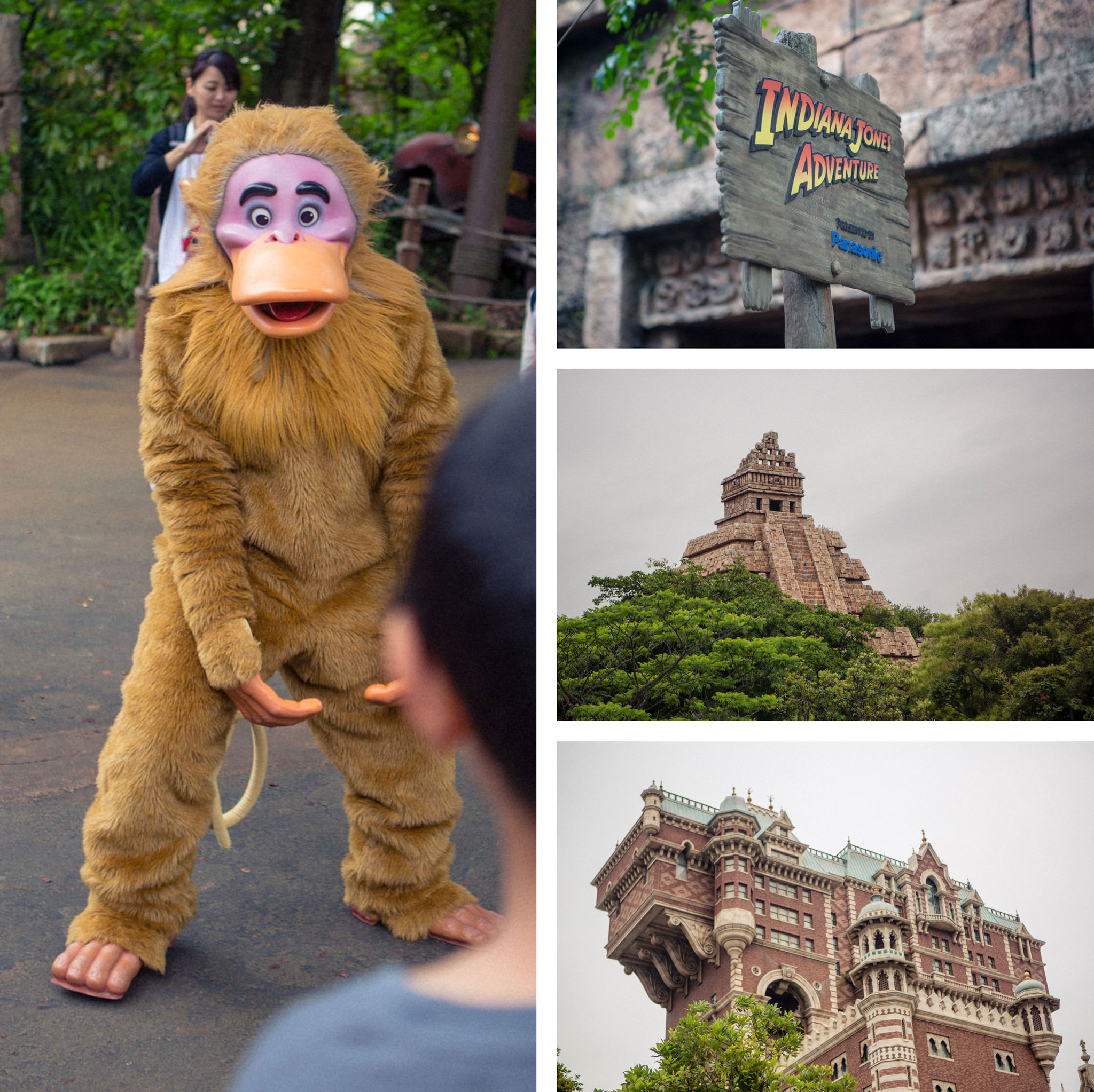 monkey at disney sea - indiana jones