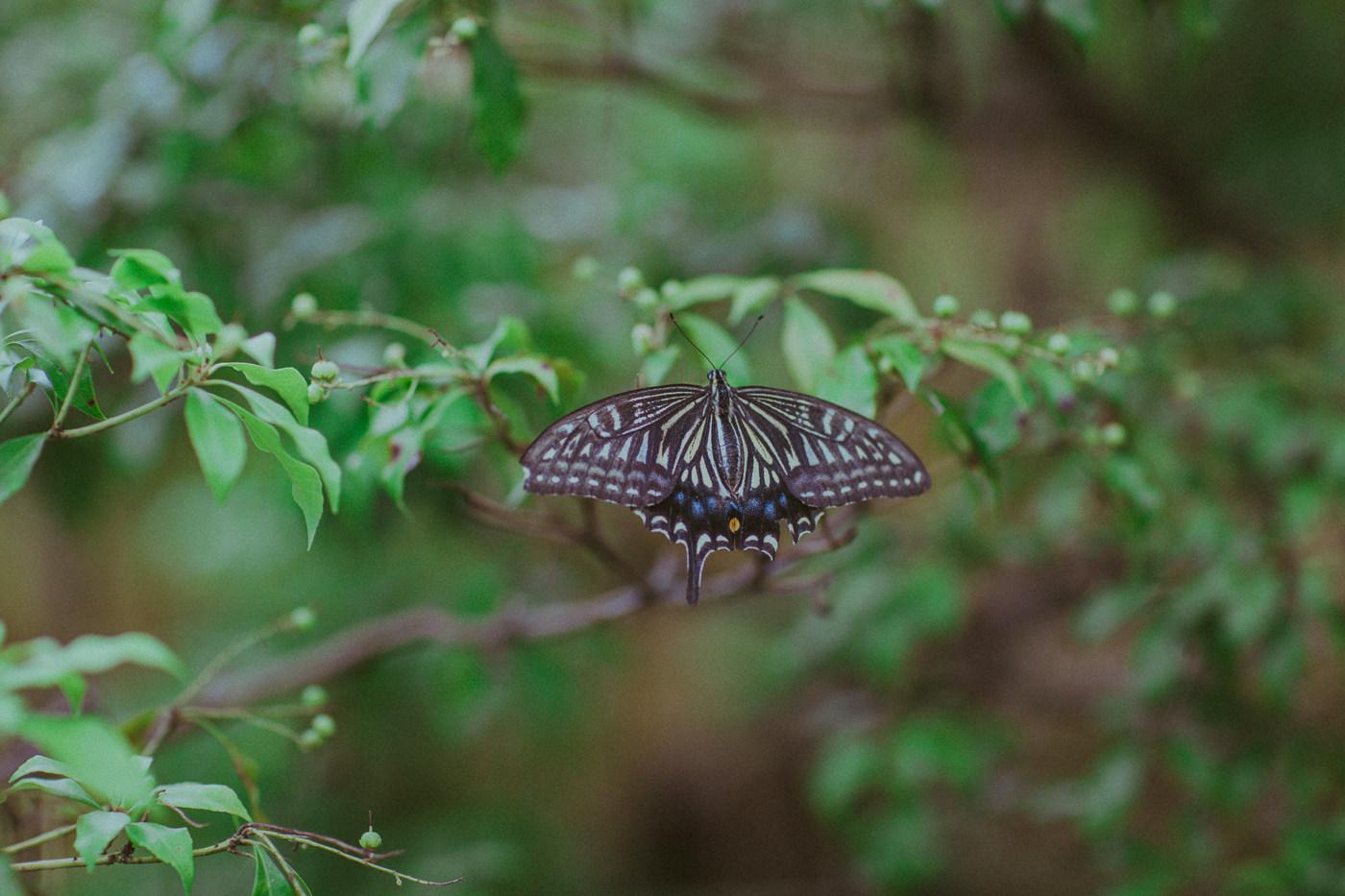 serenity - butterfly in garden
