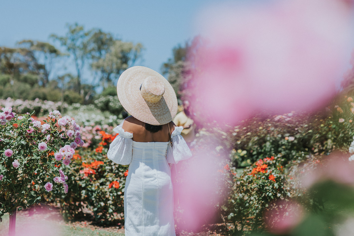 large brim hat - photographed from back in rose garden