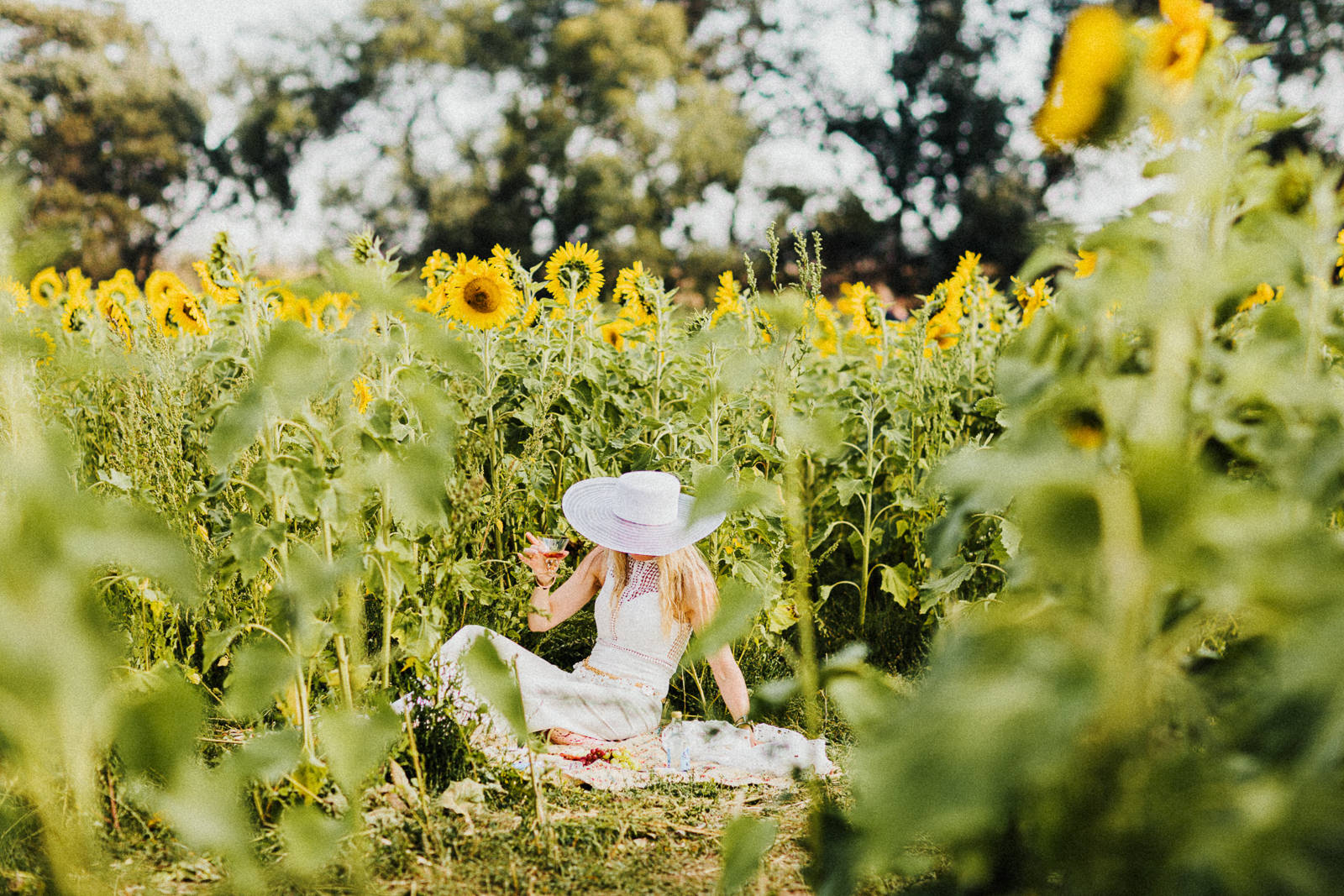 picnic in sunflowers