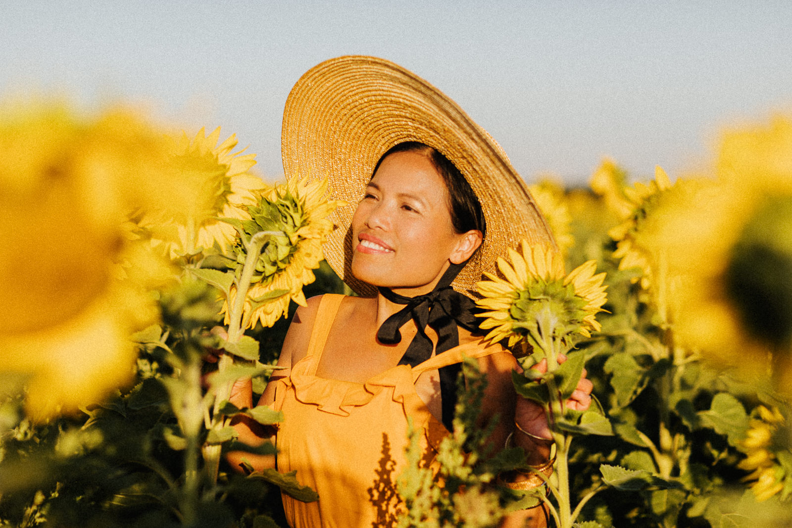Pick your own sunflowers near Melbourne