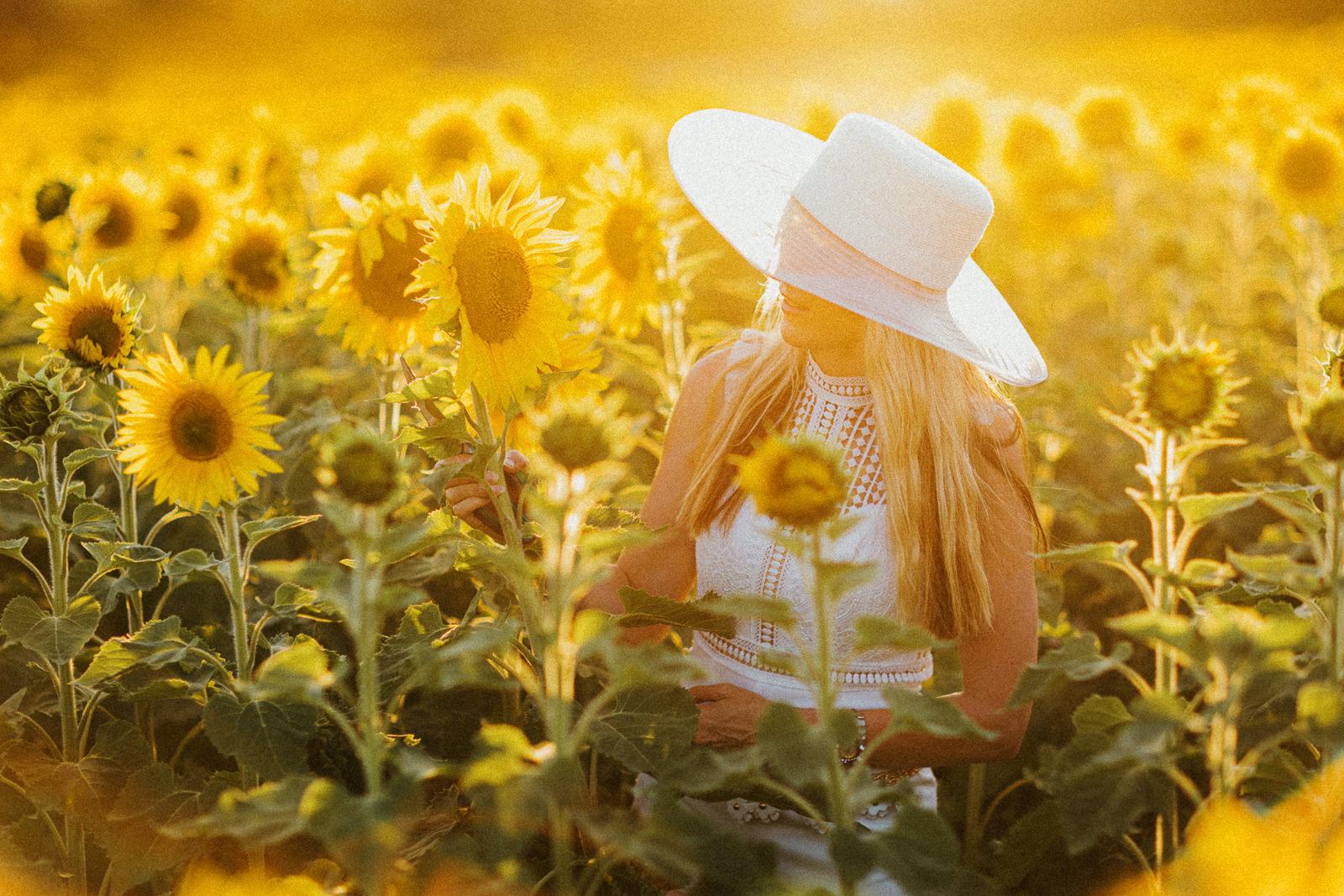 sunflowerfield at sunset