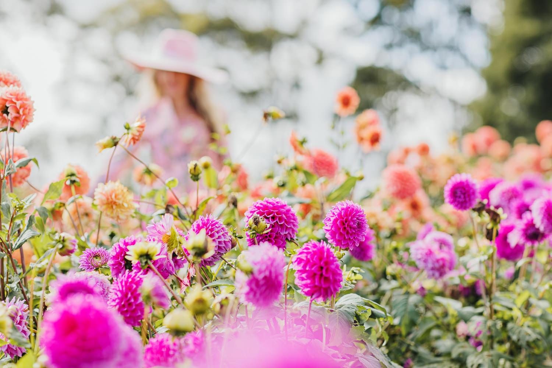 woman in background of flower field